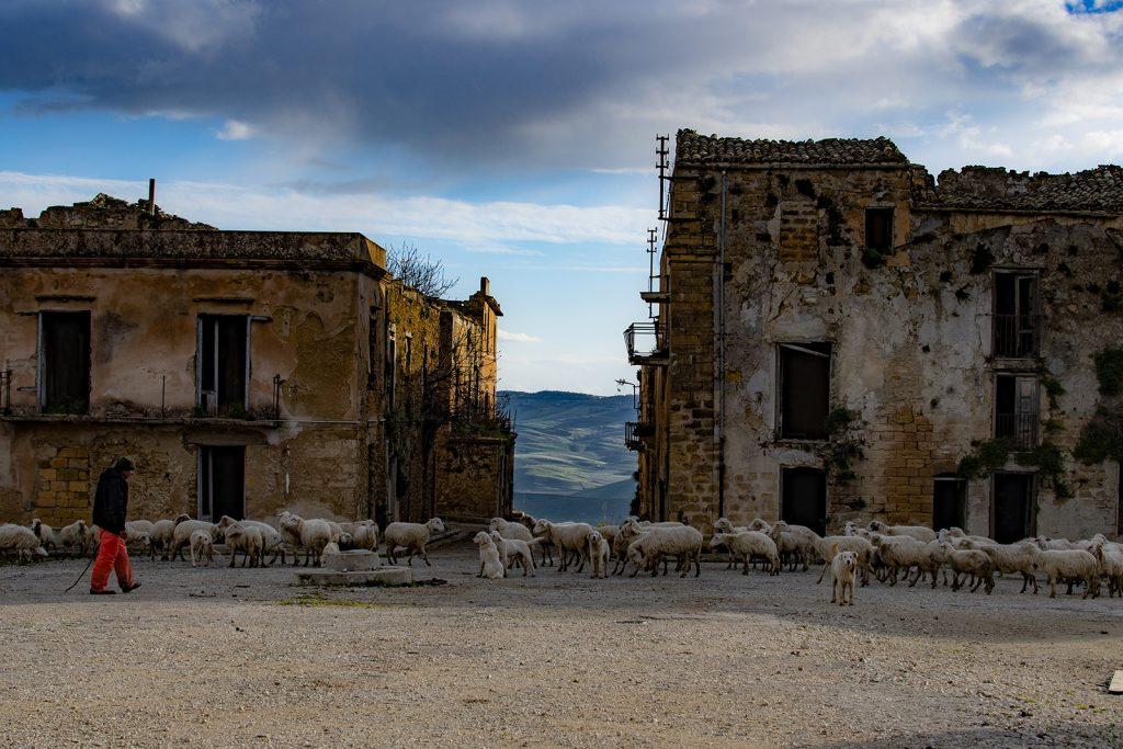Pecore e pastori a Poggioreale