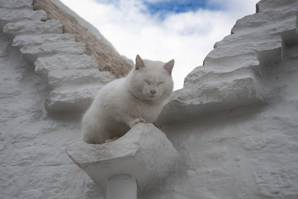 Gatto di Alberobello
