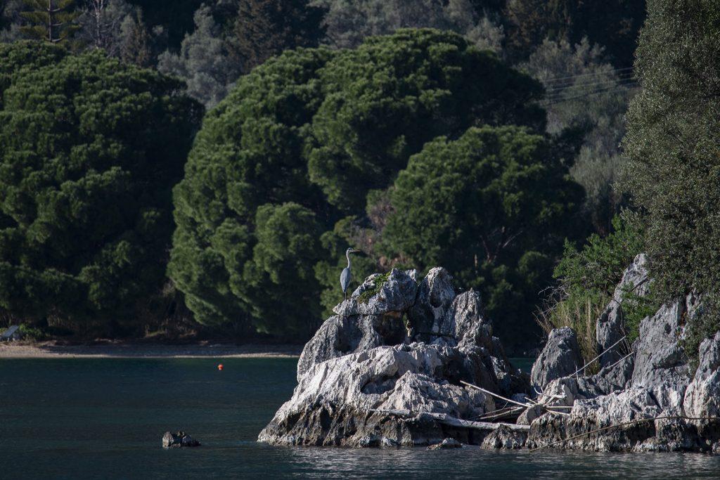 Cefalonia, Aitone al mare. Vacanze in barca a vela