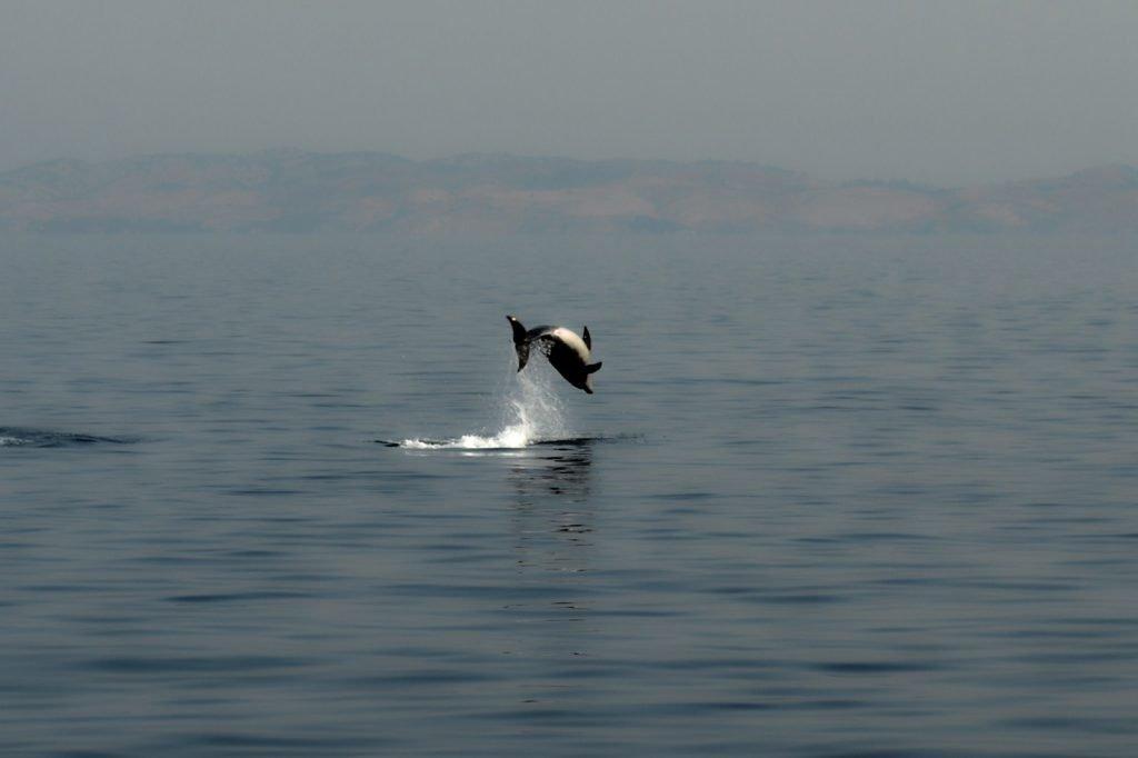 Delfini. Vacanze in barca a vela